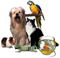 ****** Professional Pet Sitter with Affordable Rates *******