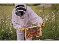 Beekeeper required. Knowledge in setting up and managing beehives?