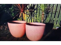 Pair of Pink ceramic plant pots in excellent condition