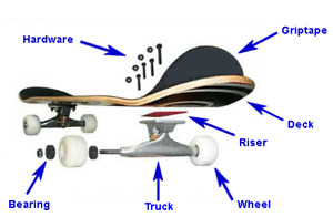 skateboard and longboard parts