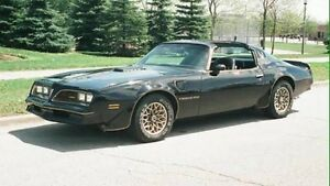 Looking to buy******1979 TRANS AM Leichhardt Leichhardt Area Preview