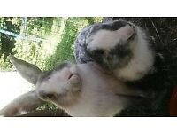 Two sister rabbits and hutch & run