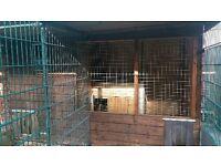 Dog kennel 10 x7 runs 10 x 5