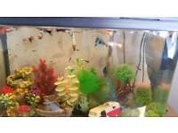 Aquarium. Quick.No fishes in it!
