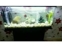 150L fish tank