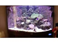 Marine fish tank and entire contents