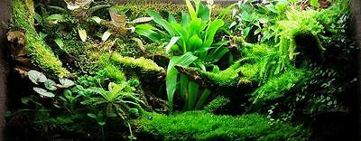 Green_Thumb_Air_Plants