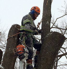 BUDGET TREE REMOVAL, TREE CARE SERVICES MISSISSAUGA, GTA