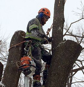 SKILLED TREE CARE SERVICES - BEST PRICES in the Industry-SAVE $$