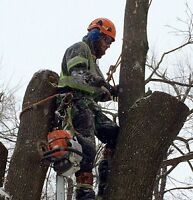 BUDGET TREE REMOVAL-CERTIFIED-INSURED-LICENSED-WSIB-PROFESSIONAL