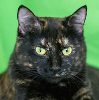 MEOW Foundation's Spunky Myrna Looking for a Fun Family!