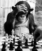 Volunteers required for local chess club