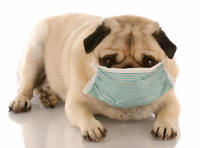 PETS ALSO NEED CLEAN AIR-  $99 ALL INCLUDED