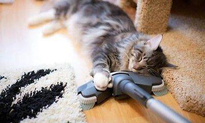Vacuums n More