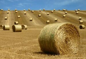 Round Oat Greenfeed Bales