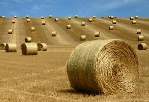 Round Greenfeed Bales
