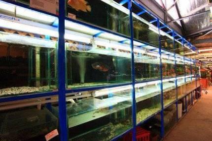 Aquarium and garden business for sale