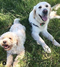 Brooke's Dog Walking Glenelg Holdfast Bay Preview