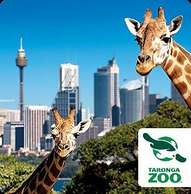 Two Taronga Zoo Adult Ticket Pass 3 Pickup Locations + Free Ride Lane Cove Lane Cove Area Preview
