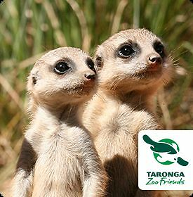 2 Taronga Zoo Ticket Pass + free Ride Sydney City Inner Sydney Preview