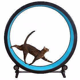 One Fast Cat Wheel - black - as new condition Palmyra Melville Area Preview