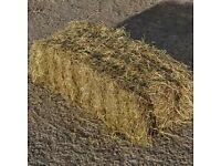 Hay for Horses and sheep