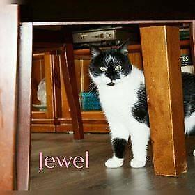 Jewel Rescue Cat