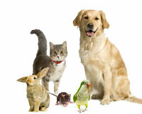 Experienced Pet Care and Dog- walking in Crestview
