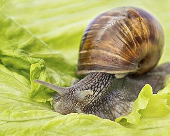 Ungebetene Gartengäste werden mit Ei ferngehalten. (Copyright: Thinkstock / über The Digitale)