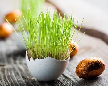 Eierschalen lassen sich zu hübschen Töpfchen recyclen. (Copyright: Thinkstock/ über The Digitale)
