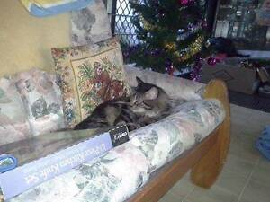 Male Affectionate Desexed house trained cat 7 years young. Watsonia Banyule Area Preview