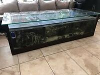 Very large beautiful coffee table sump fish tank