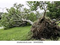 Fallen trees required for logs