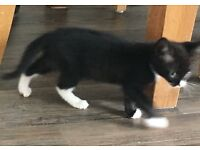 Kitten for free, but has a heart murmur