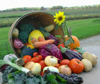 Fruit, Vegetable and Flower Stand