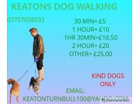 DOG WALKING CHEAP AND RELIABLE