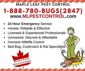 1-888-780-2847 Kill Bed Bugs, Cockroach, Mice, Rats & More 24HRS