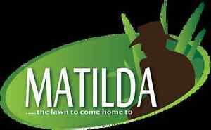 Matilda Soft Leaf Buffalo Turf Springwood Blue Mountains Preview