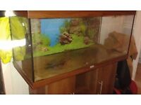 juwel 180 fish tank and cabinet