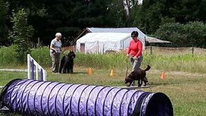 DOG TRAINING - OBEDIENCE, FLYBALL, FUN DOG, BEHAVIOR CONSULTS Peterborough Peterborough Area image 8