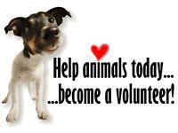Volunteer available immediately