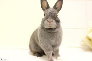 "Young Female Rabbit - Bunny Rabbit: ""Arielle"""