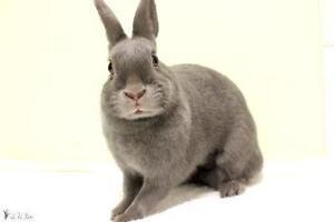 """Baby Female Rabbit - Bunny Rabbit: """"Cookie"""""""