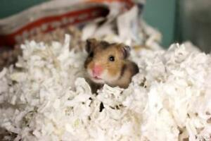 "Baby Female Small & Furry - Hamster: ""Anita"""
