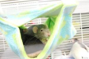 """Adult Female Small & Furry - Rat: """"Shelby"""""""