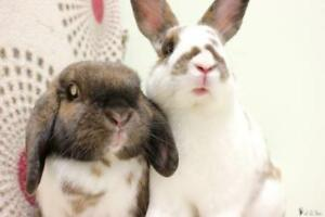 """Young Male Rabbit - Bunny Rabbit: """"Cecil"""""""