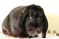 "Young Male Rabbit - Bunny Rabbit-Bunny Rabbit: ""Cookie"""