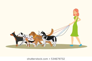 Dog / Pet Walker and Pet sitting!