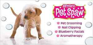 Grooming spots avaliable Sunday 22nd
