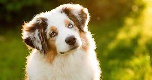 Happy Pup Pet Walking Lake Macquaire Newcastle Newcastle Area Preview